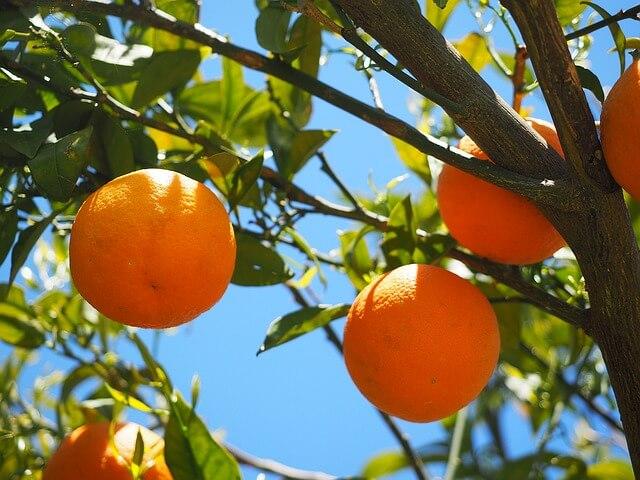 oranges-1117631_640