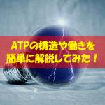 【超簡単】ATPの構造や働きをわかりやすく解説してみた!