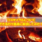 【必見!】TCAサイクルについてできるだけ簡単に解説してみた!